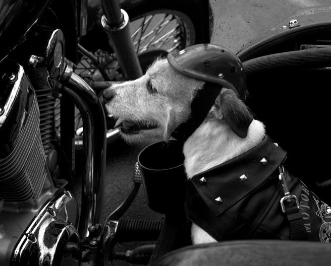 Dog B&W II