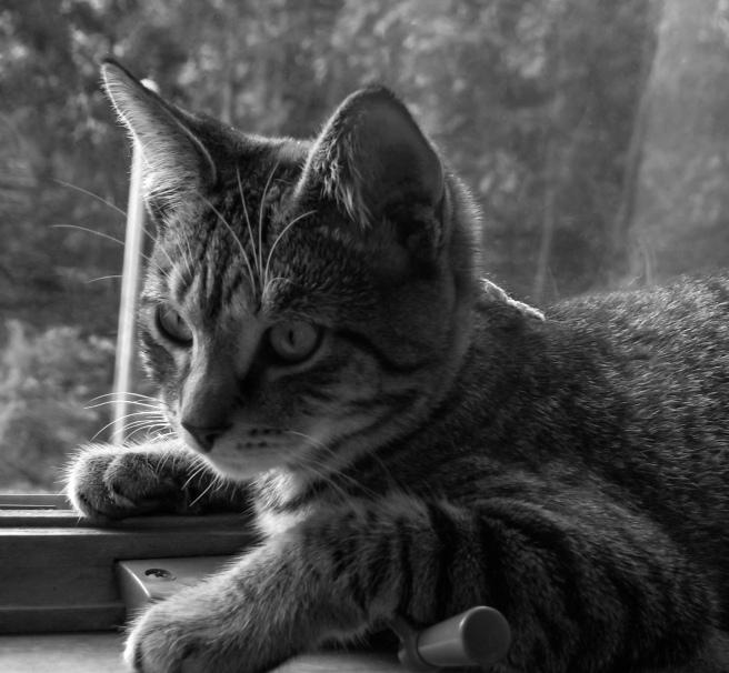 kitten-