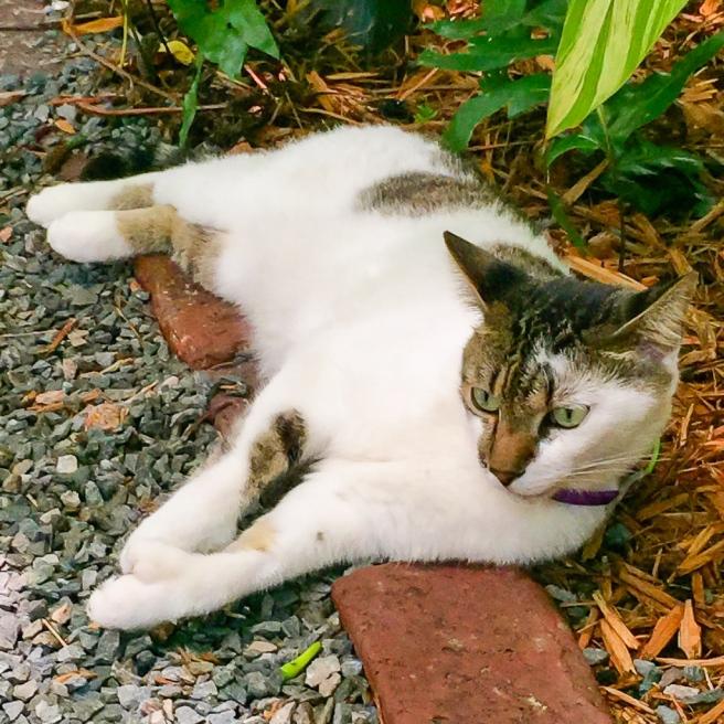 Hemingway cat (5 of 5)